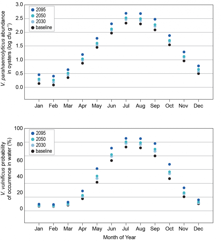 Figure 6.4: Projections of <i>Vibrio</i> Occurrence and Abundance in Chesapeake Bay
