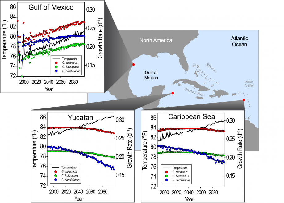 Figure 6.6: Projected Changes in Caribbean <i>Gambierdiscus</i> Species